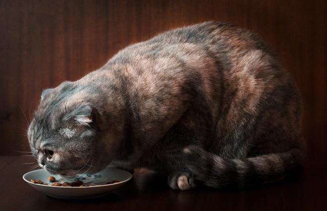 【電磁波】レンジでチンした料理は身体に悪いは本当?