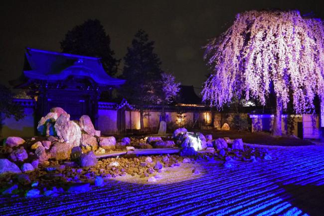 京都の桜は「夜」に愛でる。厳選!京都の優美な夜桜ベスト5