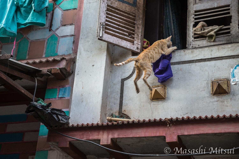 【フォトレポート】空飛び猫にノラ牛。インドは動物たちもカオスだ