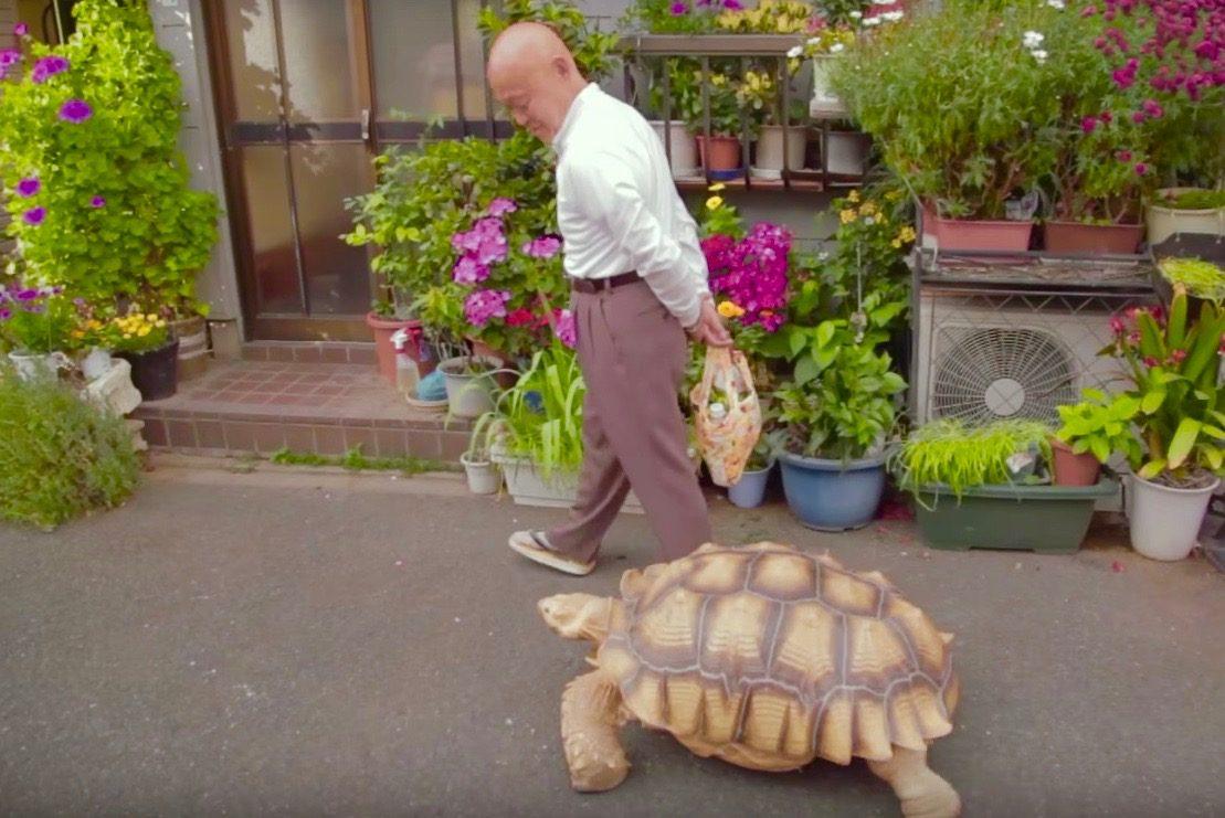 下町のおじいちゃんと散歩する「巨大ガメ」に世界が興味津々