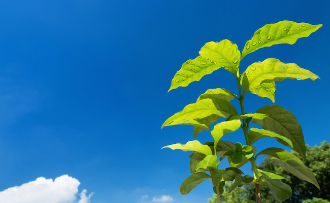 【豆知識】問題です。なぜ葉っぱは緑色に見えるのでしょうか?