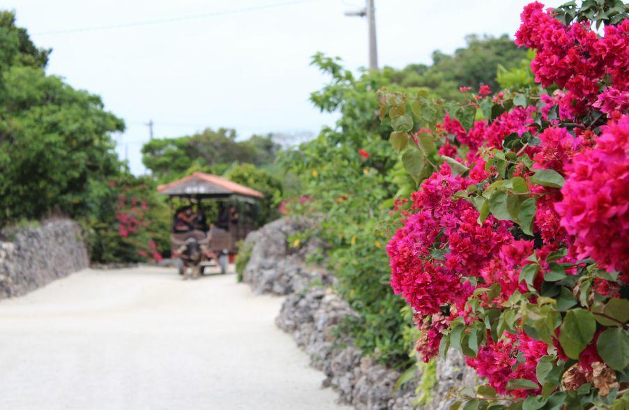 沖縄が美しく輝く「うりずん」の季節に訪れたい、県内最大の門中墓