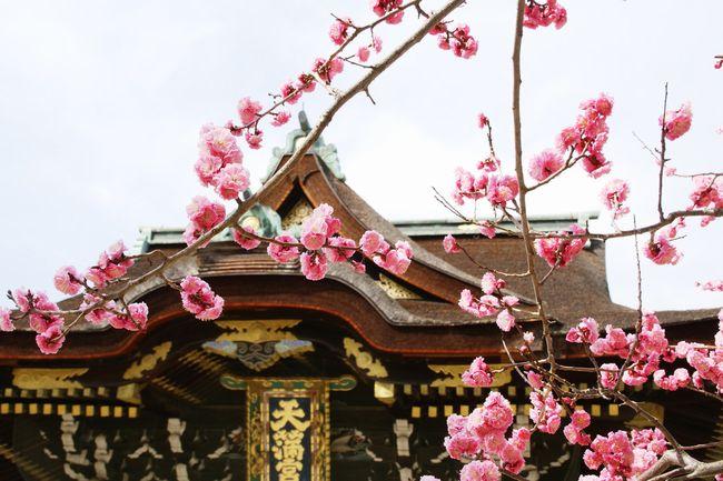 京都の梅の名所「北野天満宮」にある七不思議
