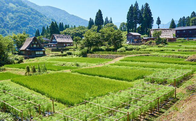 便利じゃないけど昔は良かった。里山が救う「日本経済」と「人の心」