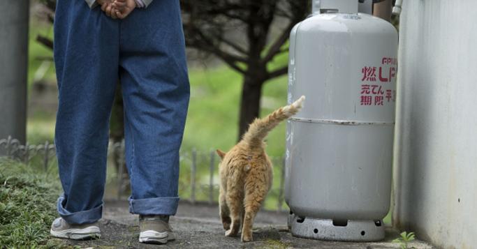 「助けてくれたんだね・・・」男性を日航機墜落事故から救ってくれた猫のお話