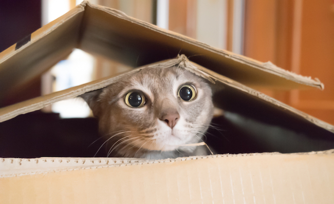 ニャンと!猫を長いこと飼うとアレルギーが抑えられる―米大学研究