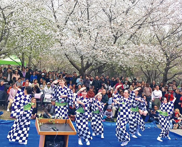 ニューヨークでも花見!桜の下で三味線や花笠音頭を披露