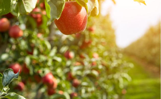 自殺寸前に起きたある出来事。「奇跡のリンゴ」はこうして生まれた