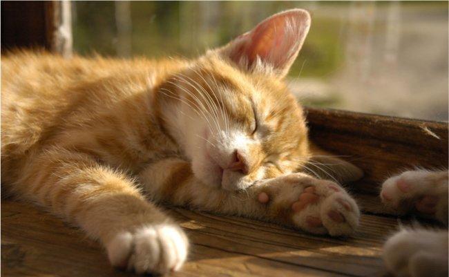 猫、睡眠、池田清彦、ホンマでっか