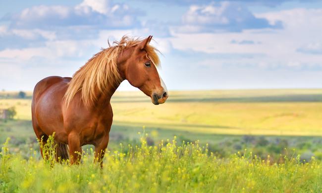 爽やかイメージと大違い。本当は怖い「天高く馬肥ゆる秋」の意味