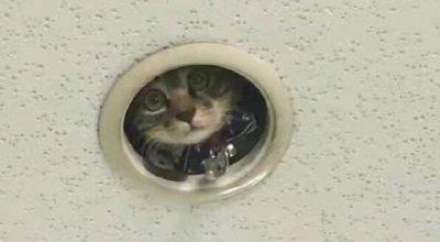 監視カメラ 猫 もふもふ
