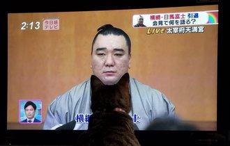 【速報】引退会見する日馬富士の顎に猫がピタリとハマる事案が発生